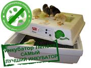 Leleka egg incubators - www.incubator-ck.com